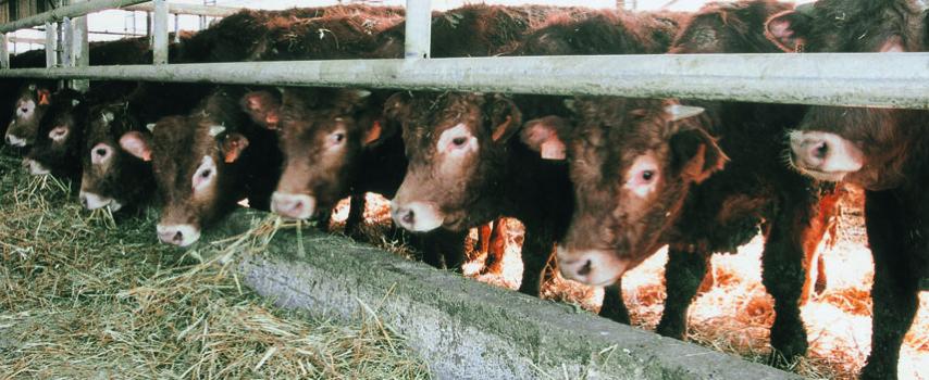 Για κινδύνους από την αλόγιστη χρήση αντιβιοτικών στις εκτροφές μιλούν οι οργανώσεις καταναλωτών