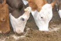 Έρχονται νέοι κανόνες για τους επίσημους ελέγχους στην αγροδιατροφική αλυσίδα