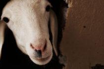 ΥΠΑΑΤ: «Ηθική δέσμευση του ανθρώπου, να σέβεται όλα τα ζώα»