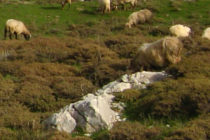 Η ελληνική πρόταση στην Κομισιόν για το μέλλον του ευρωπαϊκού αιγοπρόβειου κρέατος