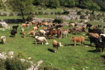 Έντονος προβληματισμός για τις υπουργικές δηλώσεις περί υπαγωγής εκμεταλλεύσεων σε ένα μόνο Αγροπεριβαλλοντικό