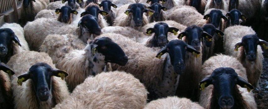 Meet the Lamb – από το 2017 και για τρία χρόνια