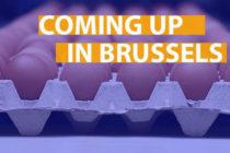 Σε ερωτήσεις ευρωβουλευτών για το σκάνδαλο με τα αυγά, απαντά η Κομισιόν